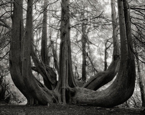 These Ancient Trees Have Stories to Tell | Natural Capital | Scoop.it
