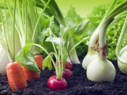 Roundup de Monsanto et intolérance au gluten ? | Toxique, soyons vigilant ! | Scoop.it