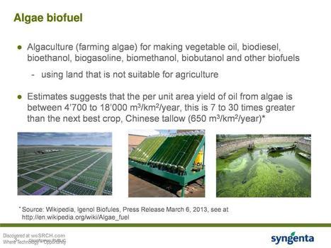Algae biofuel - free slide submission, upload slide - weSRCH | algae biofuel | Scoop.it
