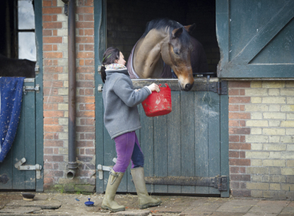 Feeding horses: the latest news and research | all things horsey | Scoop.it