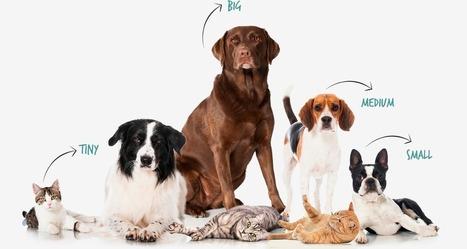 Pet Insurance U - We Make Pet Insurance Easy | Natural Health | Scoop.it