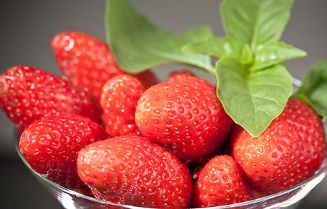 INRA - Création de la fraise Gariguette | Alimentation Santé Environnement | Scoop.it