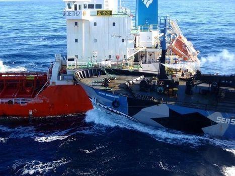 Le Japon rentre presque bredouille de sa pêche à la baleine | Chronique d'un pays où il ne se passe rien... ou presque ! | Scoop.it