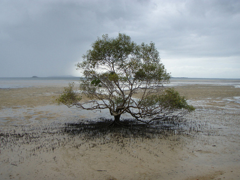 How wetlands can help us adapt to rising seas | Geography | Scoop.it