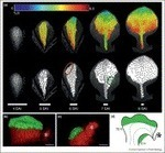 Current Opinion in Plant Biology - Live-imaging of plant development: latest approaches | Emerging Research in Plant Cell Biology | Scoop.it
