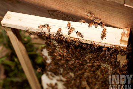 For backyard hobbyists, hives are the bee's knees - The Independent Weekly | Growing Food | Scoop.it