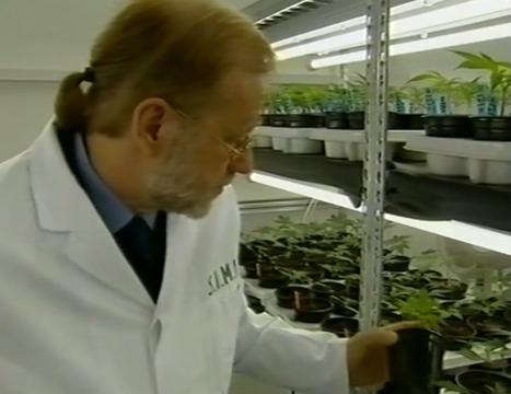 Gamma bestraling medicinale cannabis uitgelegd!/Gamma irradiation medical cannabis | Medicinale-cannabis | Scoop.it