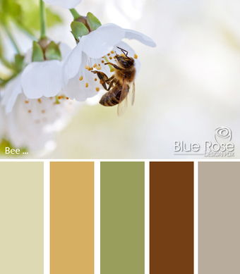 Color Inspiration: Bee | Typography & Color Inspirations | Scoop.it