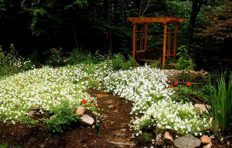 Raised beds, native plants, downsizing can add joy to gardening | Native Plants | Scoop.it