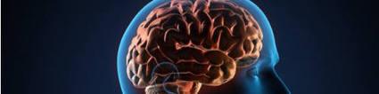 Autisme: un excès de connexions nerveuses traitable ? | Digital games for autistic children. Ressources numériques autisme | Scoop.it