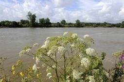 Les conseils locaux de la biodiversité fleurissent – Environnement-magazine.fr | Nature en Ville | Scoop.it