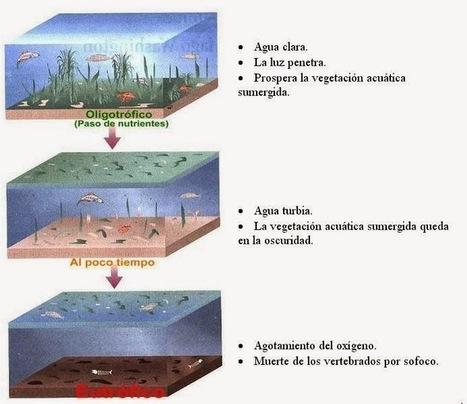 4º ESO. TEMA 10. DINÁMICA DE LOS ECOSISTEMAS | Biología | Scoop.it