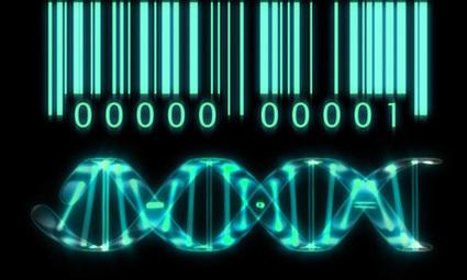 Le transistor biologique donne vie à l'informatique | Présent & Futur, Social, Geek et Numérique | Scoop.it