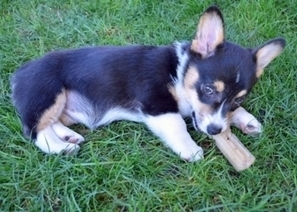 Are Rawhides Safe for Dogs? | Pet Health Tips | Scoop.it