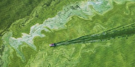 Solving #Lake #Erie's #Toxic #Algae Bloom Crisis | Farming, Forests, Water, Fishing and Environment | Scoop.it