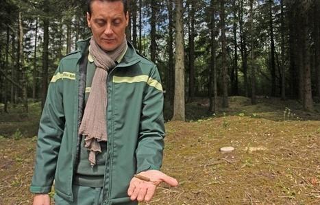 A Verdun,  la forêt est la gardienne de la mémoire | Biodiversité | Scoop.it