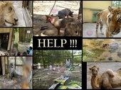 Please don't let the animals suffer in your zoos   Rhino poaching   Scoop.it