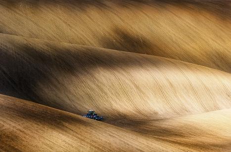 Monsanto indique tester des semences de blé OGM dans le Dakota du Nord | Abeilles, intoxications et informations | Scoop.it