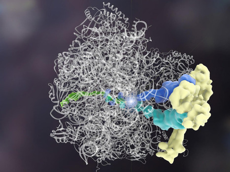 Science Graphic of the Week: Scientists Discover the First Protein That Can Edit Other Proteins | WIRED | Science&Nature | Scoop.it