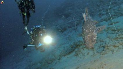 En vidéo : Laurent Ballesta plonge avec les coelacanthes | Plongée | Scoop.it