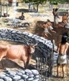 Art of cheese-making is 7,500 years old | World Neolithic | Scoop.it