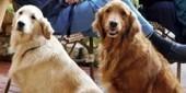 Dog café in LA | FOTOTECA LEARNENGLISH | Scoop.it