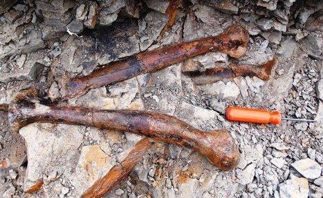 """Pearl"" the Mystery Dinosaur | Paleontology News | Scoop.it"