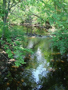 Mill River Restoration   Fish Habitat   Scoop.it