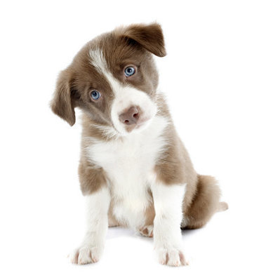How to Choose the Perfect Pet Name | Troy West's Radio Show Prep | Scoop.it