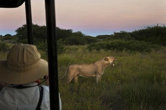 Opinion: Why Are We Still Hunting Lions? | Wildlife and Environmental Conservation | Scoop.it