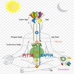 Ayurveda : conseils pour Vata, Pitta, Kapha   Plantes medicinales ...   Santé par les plantes   Scoop.it