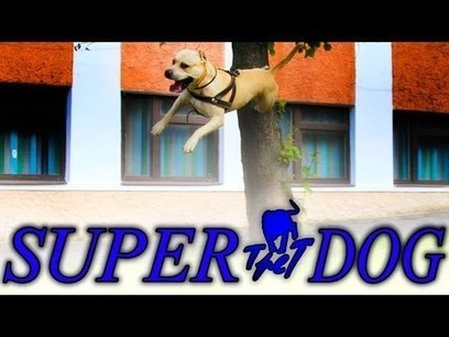TRET - SUPER DOG | Consulting | Scoop.it
