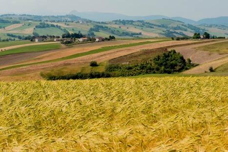 Monterosso: un viaggio tra l'antico farro delle Marche | Le Marche un'altra Italia | Scoop.it