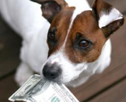 6 Ways to Budget for Your Pet's Healthcare Costs | Pet News | Scoop.it