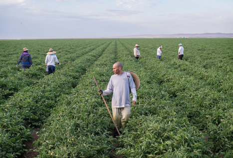 Tacking Health Care Costs Onto California Farm Produce | Humanity | Scoop.it