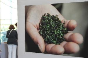 Regards croisés entre le vin et le thé | Le Blog de Terre des Thés | Actualités de Terre des Thés | Scoop.it