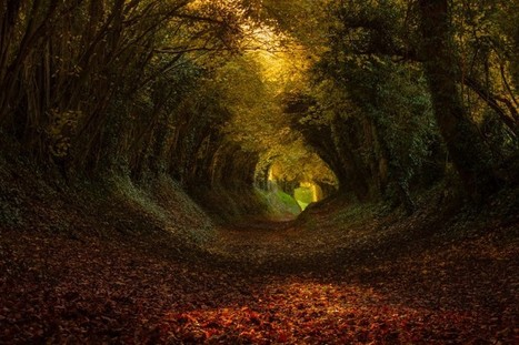 Living Tunnels Made of Trees [13 Pictures] | Dragons Hoard | Scoop.it