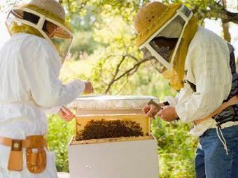 La apicultura se practicaba ya hace 9.000 años | Miel Melipona | Scoop.it