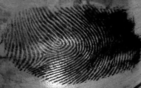 'Fingerprints on food' breakthrough   BIOSCIENCE NEWS   Scoop.it