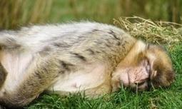 Wildlife on your doorstep: May | GarryRogers Biosphere News | Scoop.it