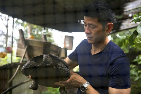 Putrajaya urged to set up inquiry into 'Lizard King' activities | Wildlife Trafficking: Who Does it? Allows it? | Scoop.it