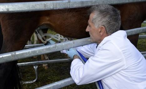 Un ramader del Pallars Sobirà comercialitza llet d'euga | #territori | Scoop.it