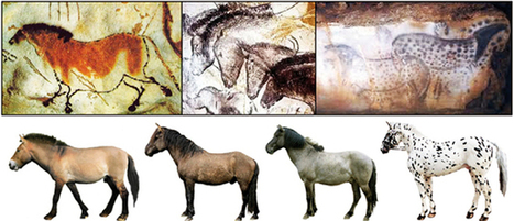 » Cave Paintings Showed True Colors of Stone Age Horses | Human Evolution | Scoop.it