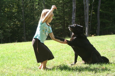 Dog Training - What is the best reward for your dog?   Pets   Scoop.it