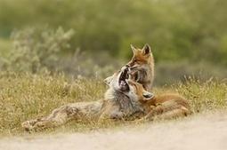The week in wildlife – in pictures   Biodiversité   Scoop.it