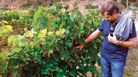 Du cep au verre, l'Inra teste les vignobles du futur | Winemak-in | Scoop.it