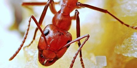 Les matériaux du futur vont copier... les fourmis | BONHOMME BATIMENTS INDUSTRIELS | Scoop.it
