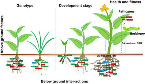 Root Microbiome Assemblage is Modulated by Plant Host Factors | Fungal population biology | Scoop.it