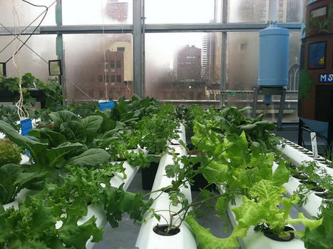 World's Largest Rooftop Farm Coming to Brooklyn   Sustainable Futures   Scoop.it
