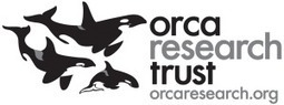 """#Orca Research Trust   Studying Marine Biology. """" Great site for all. @OrcaAvengers """"   #OrcaAvengers   Scoop.it"""